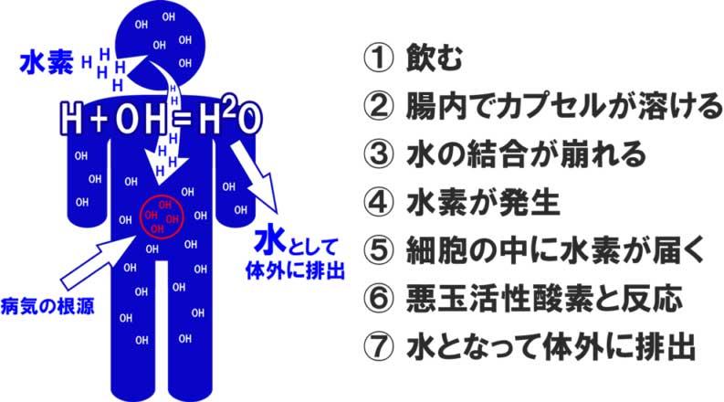 活性酸素の除去
